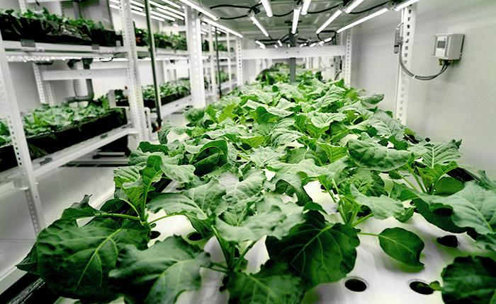 ZIN Corporation Smart Farm Showroom